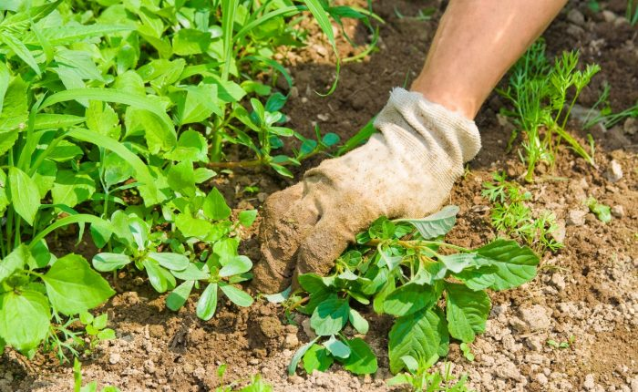 Bio Gartenpflege Hand umfasst Pflanze